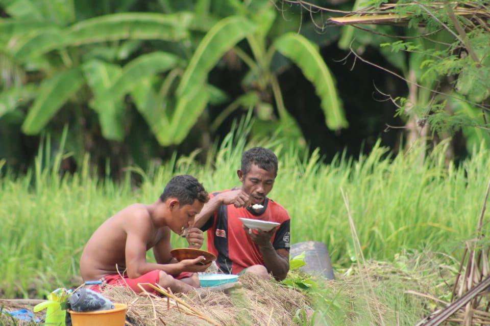 Areal persawahan Luwuk (dok.JPIC OFM Indonesia)
